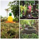 頭からずっと離れないパイナップルパークのテーマソング|沖縄旅の思い出フォトコンテスト