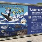 県立博物館☆海のビックリ生物展(那覇市)
